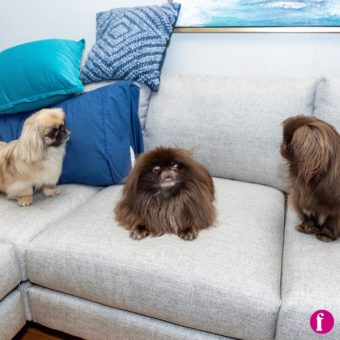Okay, here's the plan. The whole sofa belongs to me, and sometimes I'll let you guys sit on it